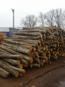 We buy timber of deciduous and conifer trees and finishing of pallets.